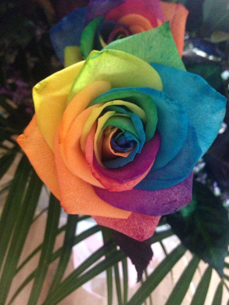Rainbow rose!