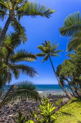 オールポスターズの Andrew Shoemaker「Tropical Coastline of Princeville, Hi」#Kauai #カウアイ島