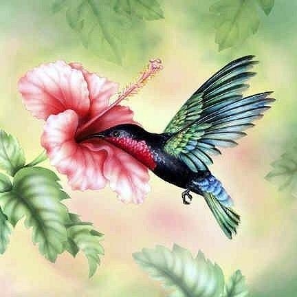 26 Best Images About Wild Bird Care On Pinterest Wild