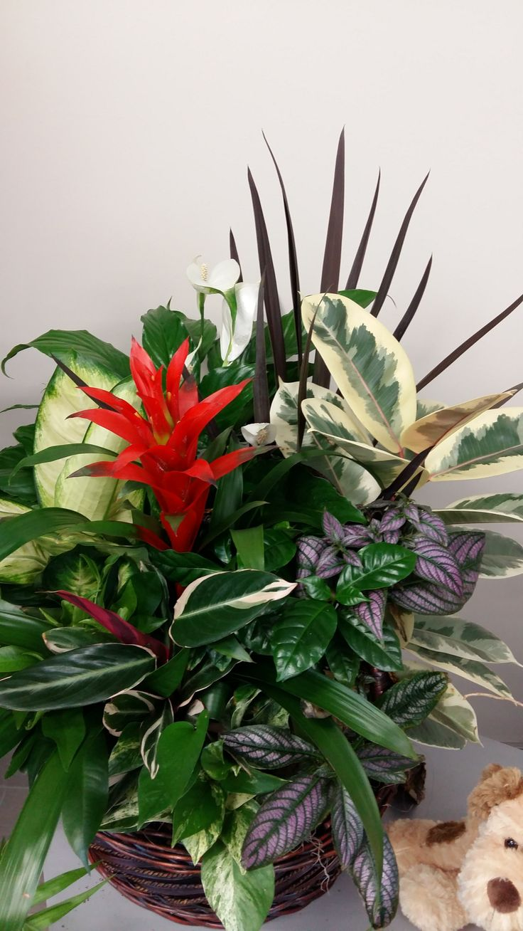 In store Brant Florist designs:)