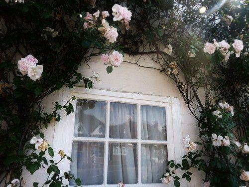 #rose #window #vine #garden #house