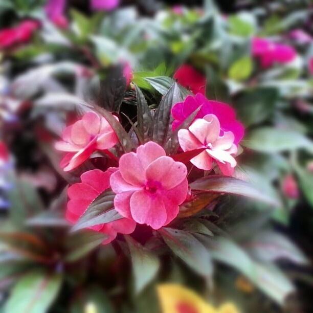 Februar Blumen | maipikucha