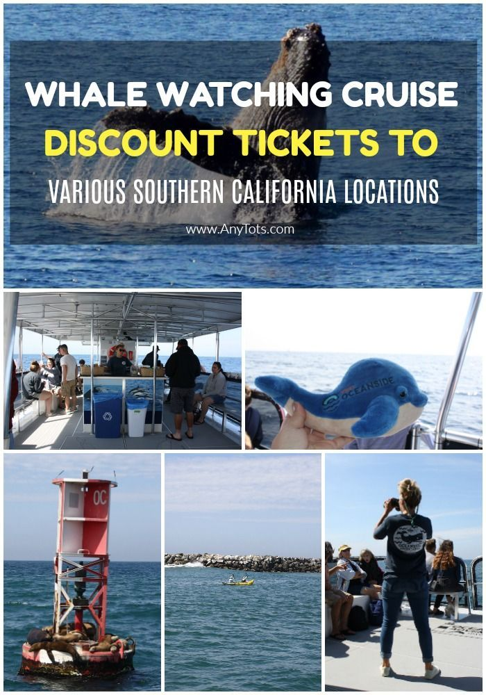 Whale Watching Discount Tickets Southern California Locations Whale Watching Cruise Whale Watching California Travel