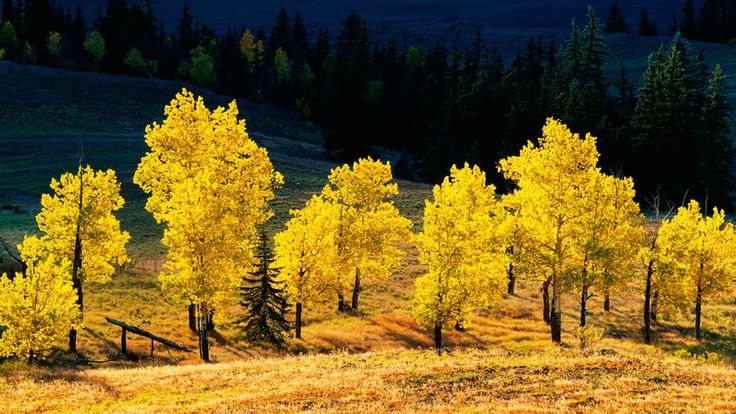 Top 18 Spots for Fall Color | Go on a foliage tour of the West at our favorite places to soak up the season's golds, crimsons, and more