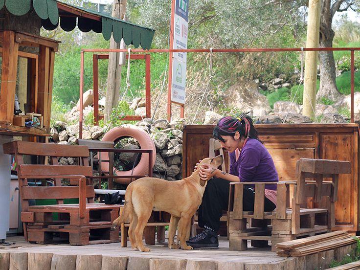 Bodrum'da karavan kampı yapmak isteyenlere harika bir öneri: Bodrum Vosvos Camping & Bora Sencer Sanat Köyü!