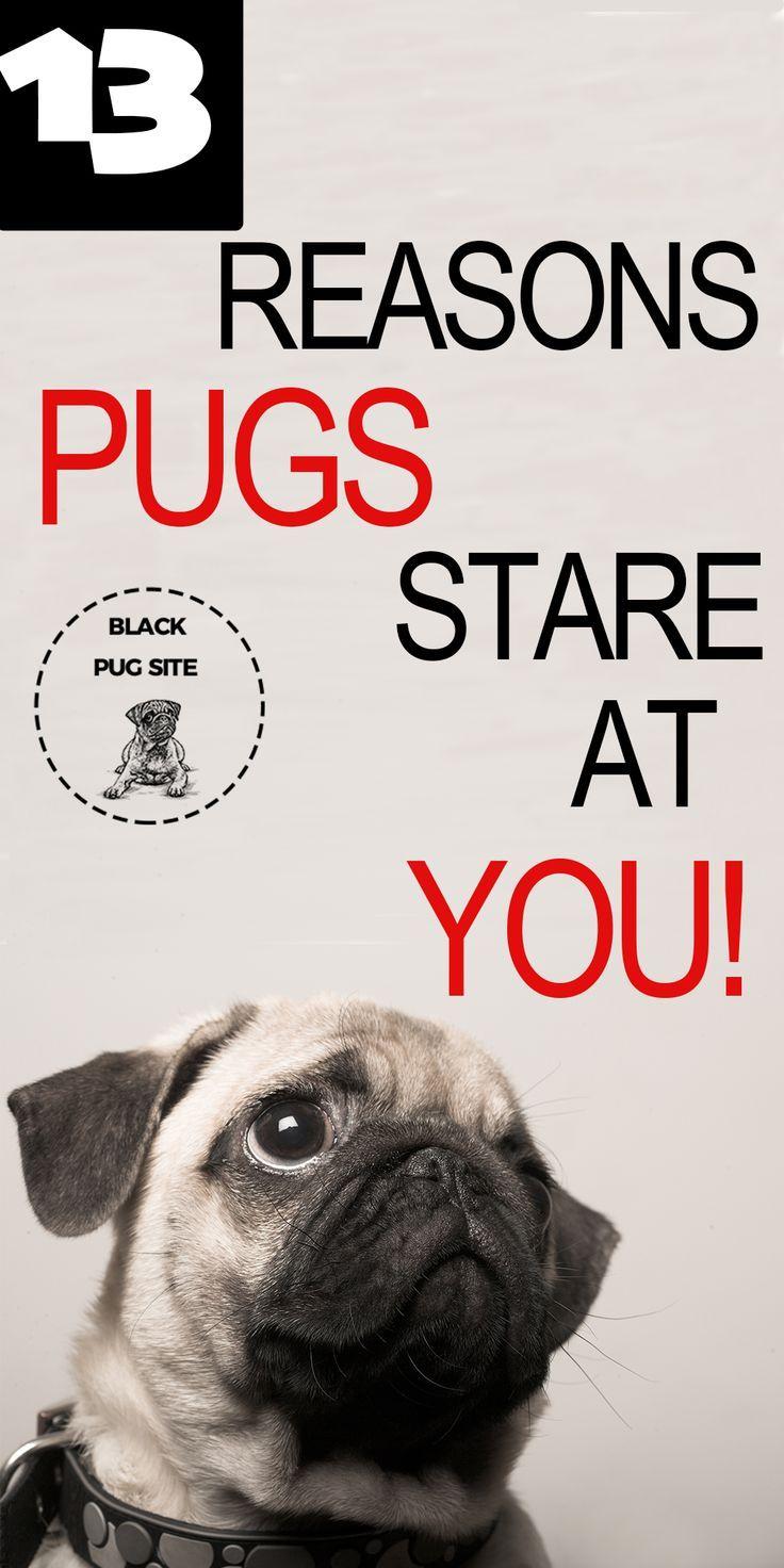 Pug Mean Face I Still Hug Him Pug Dog Pictures Pugs Funny