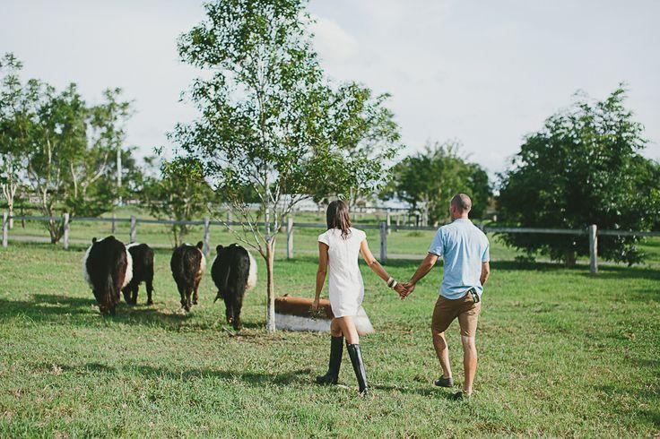 #engagement #wedding #couplesshoot #bride #bridetobe #groom #groomtobe #inlove #wearethetsudons #photography #engagementphotoshoot #weddingphotography #farm #goldcoast #gettingmarried #tree #hinterland  #river #riverbank #cow #cows