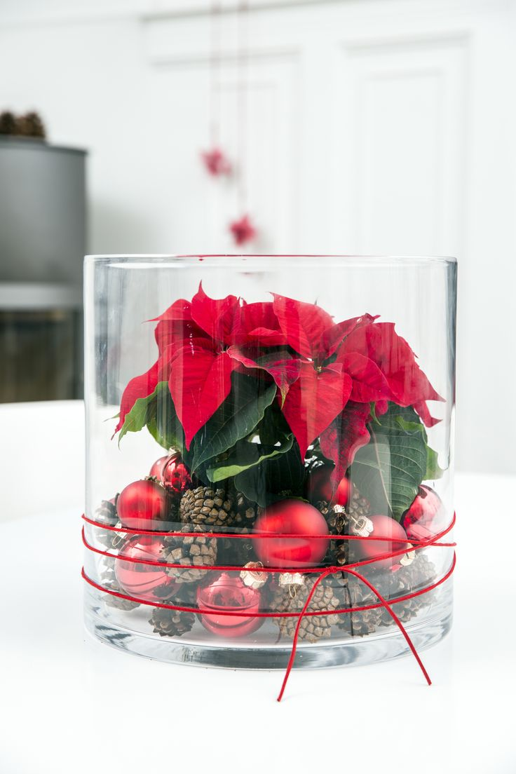 Decoration made easy with poinsettias