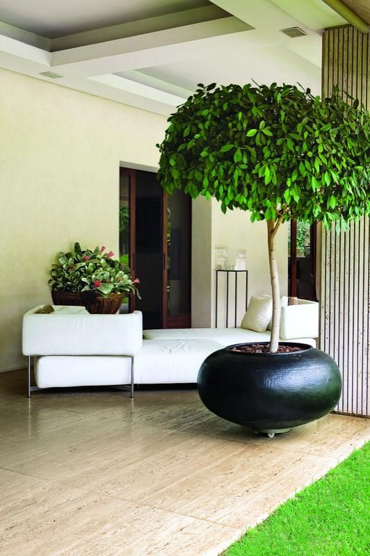 Ficus benjamina set into a tin pot - landscape gardens - Leo Laniado // Great Gardens & Ideas //