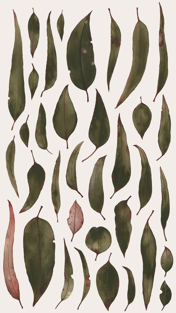 Australian Native Flora by Natalie Ryan, via Behance.    Series of same object, all different looks/cultures => Idea of ABI doesn't discriminate?