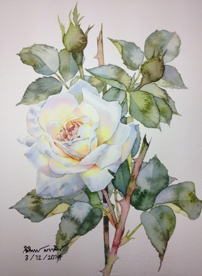 White Rose Watercolor Rose Rose Painting