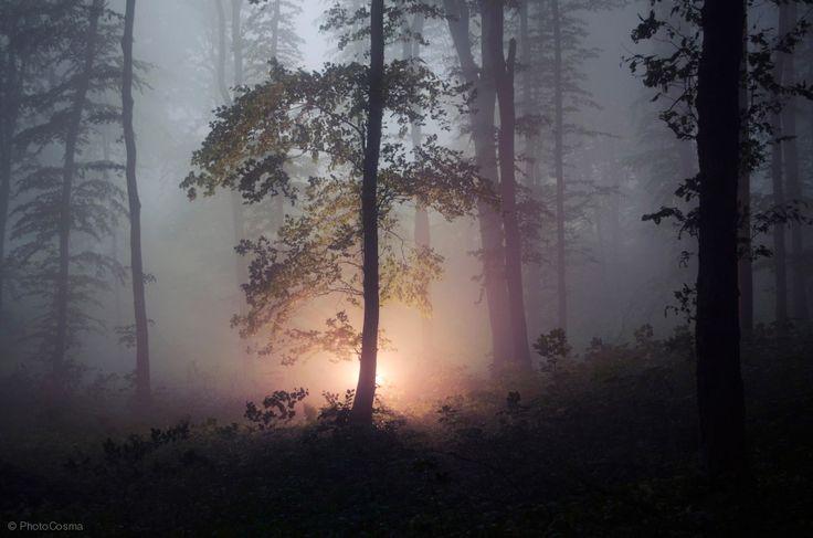 "magic-spelldust: "" Magical Forest by PhotoCosma """