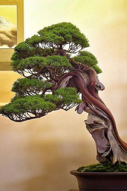 Bonsai ağaçları hak kuş!