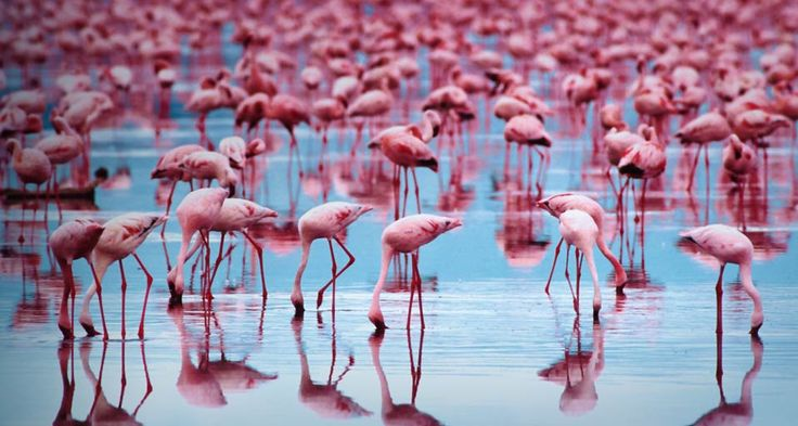 Flamingo Facts For Kids Interesting Facts About Flamingos | Cool ...