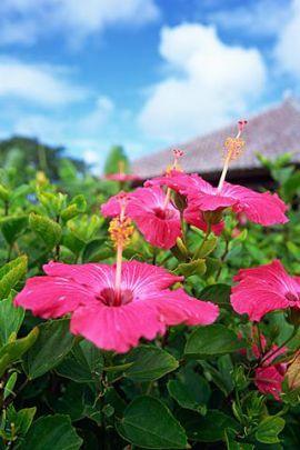 沖縄らしい赤瓦屋根とハイビスカス♪ *沖縄 ハネムーンおすすめプラン*