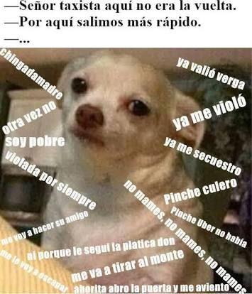 Resultado de imagen para memes perro chihuahua enojado
