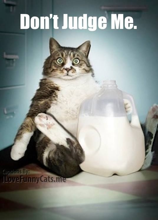 17 Best Images About Fat Cats On Pinterest The