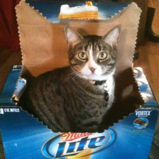 Ritz loves Miller Lite
