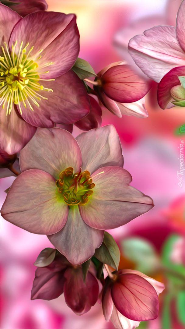 Tapety Na Telefon Ciemiernik To Ponad 55 Wysokiej Jakosci Tapet Dodanych Przez Nasza Spolecznosc Flower Wallpaper Plants Flowers
