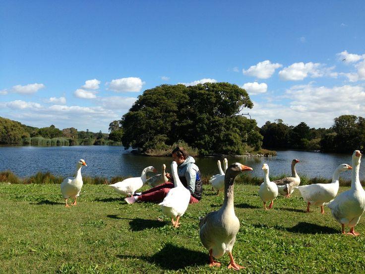 Centennial Park in Centennial Park, NSW