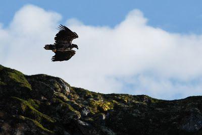 The Eagle and you. #HattvikaLodge #Skottind