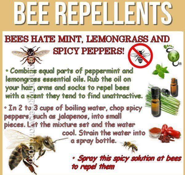 e6a73c7fec05e4a30ab416ced13cdbd1 - How To Get Rid Of Bees Flying Around You