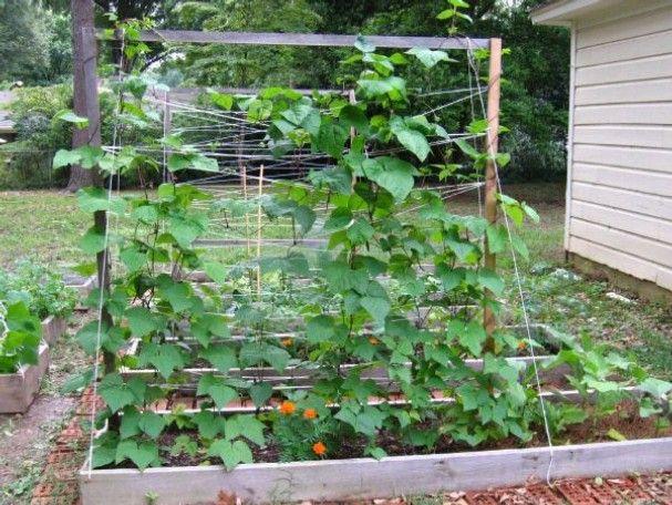 1379 best vegetable gardening images on pinterest for Vegetable garden trellis