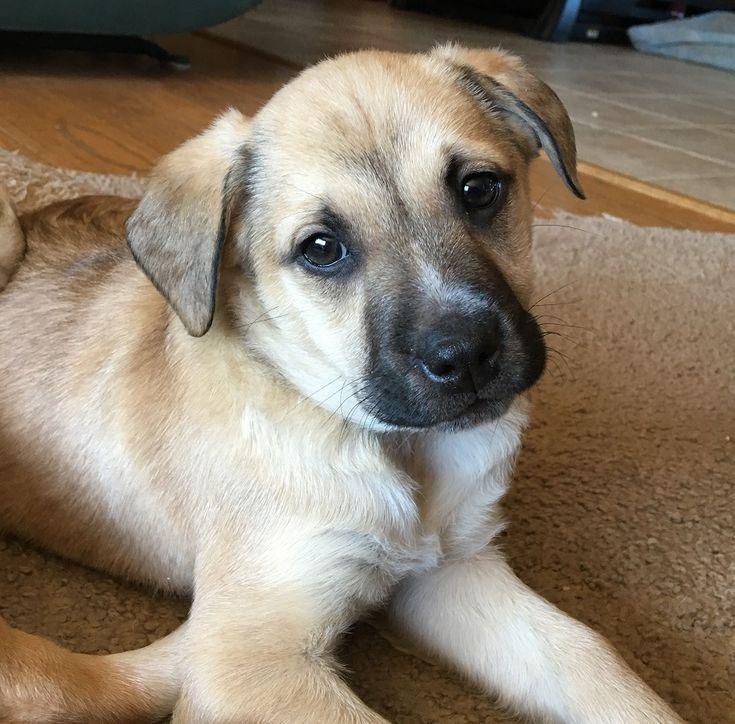 Mutt dog for Adoption in Potomac, MD, USA. ADN-756208 on PuppyFinder.com Gender: Male. Age: Baby. Nickname: Cutie Jack