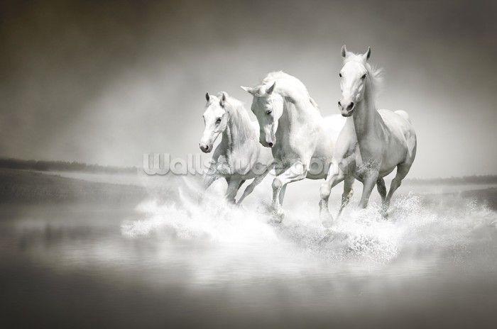 Horses Black & White mural wallpaper