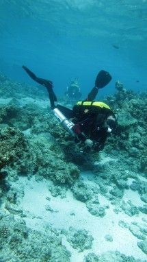 Calypso Dive & Adventures JHB - Scuba Diving. Calypso offers diver training from beginner to instructor level and technical diver training. We are the leading rebreather, cave, nitrox and trimix centre in Gauteng.  We represent SDI & TDI: one of the largest global diver agencies.
