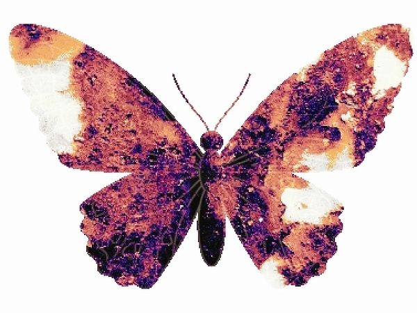Broken Wings By Robert Grubbs Pop Art Print Pop Art Pop Art Design
