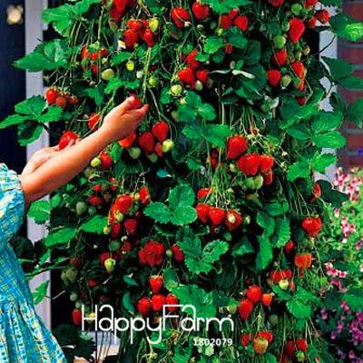 Promotion!100 PCS Tree Climbing Strawberry Seeds Courtyard Garden With Fruit and Vegetable Seeds Potted ,#HWZRHO-in Bonsai from Home & Garden on Aliexpress.com | Alibaba Group