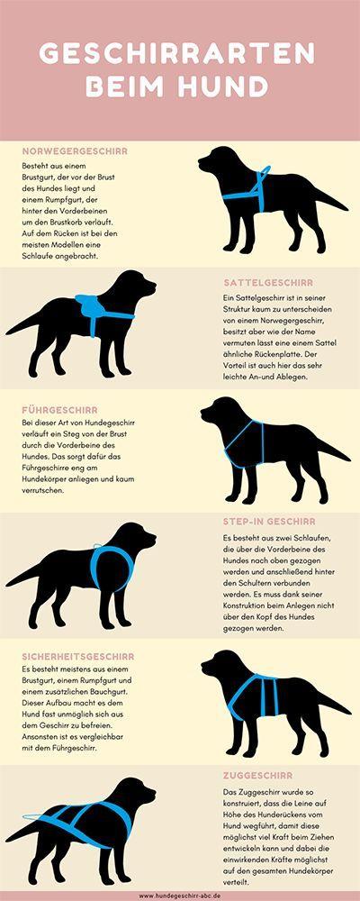 Die wichtigsten Hundegeschirr Arten: Diese Modelle solltest du…