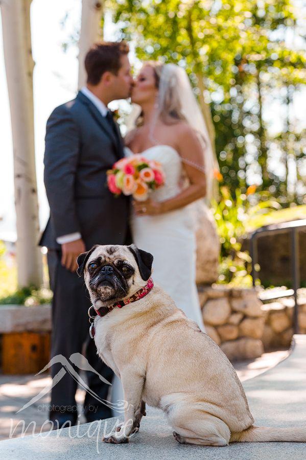 Lake Tahoe wedding photography couple with pet pug dog #laketahoewedding #Tahoeweddingphotographer © www.tahoeweddingphotojournalism.com