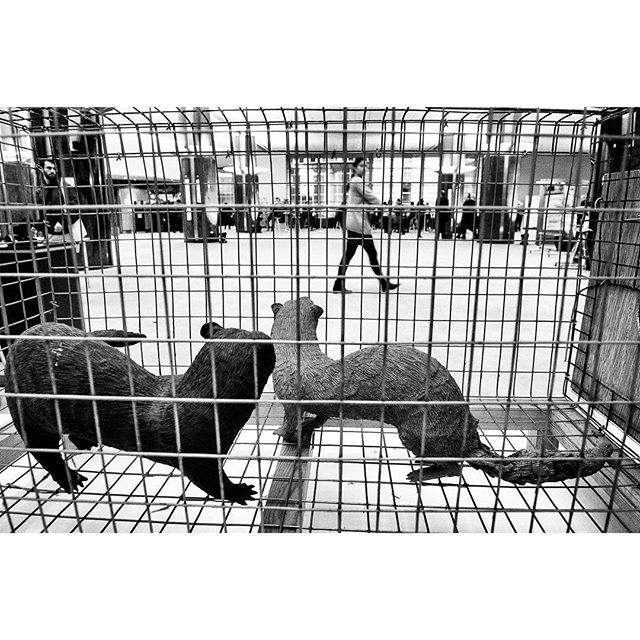 Exhibition Make Fur History at European Parliament headquarters in Brussels Belgium on 24.01.2018 . MEPs  support fur farming bans in EU Member States   #fur #animals #protest #environment #photojournalism #makefurhistory #EU #politics #europeanparliament #photjournalism #blackandwhite