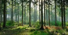 Maharashtra forest department's 24x7 helpline :http://gktomorrow.com/2016/12/21/maharashtra-forest-departments-24x7-helpline/