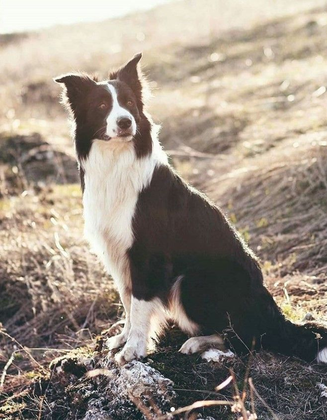 70 Male And Female Farm Dog Names With Images Dog Names Farm