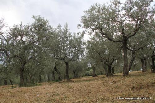 Da Vallo di Nera un appello non chiudete il CRA OLI di Spoleto