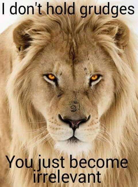 Don T Trust Girl Wallpaper Image Result For A Lion Will Never Have To Tell You It S A