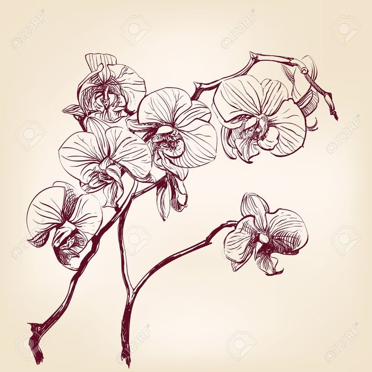 122 best images about flowers drawings of orchids on pinterest flowers orchids and orchid tattoo. Black Bedroom Furniture Sets. Home Design Ideas