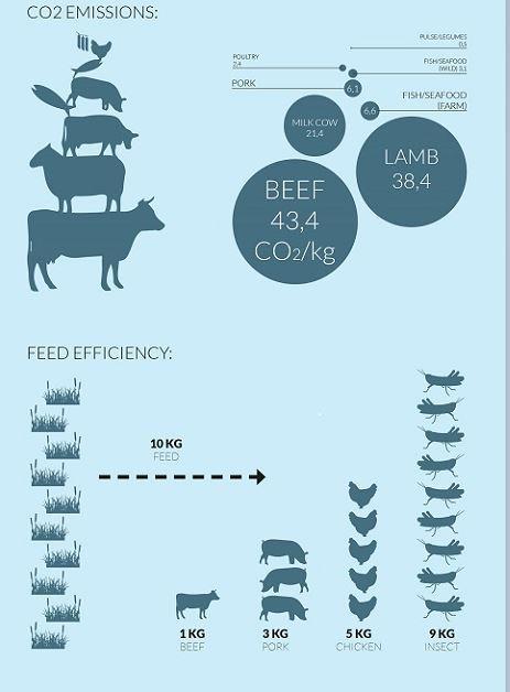 Ces fermes à insectes ultra modernes atteindront-elles leur objectif de vous convaincre de manger de la vermine ?   Atlantico.fr