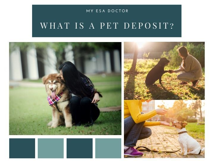 What Is A Pet Deposit Pets Emotional Support Animal Being A Landlord