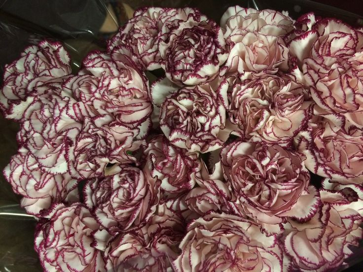 Varigated purple and white carnations