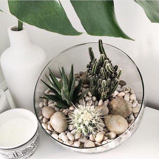 Diy Succulent Potting Mix Australia: Best 25+ Succulent Arrangements Ideas On Pinterest