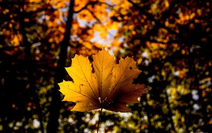 Leaf - One of the symbols of autumn.