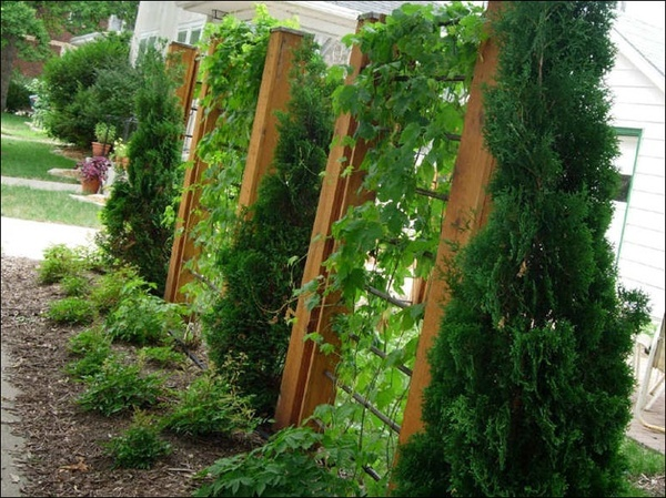 32 best images about trellis ideas by ljh on pinterest for Pinterest trellis ideas