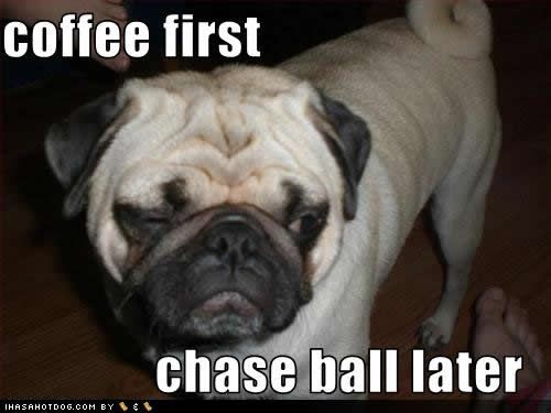 coffee funny pictures - Google Search: Funnies Dogs, Funnies Coff, Coff Pugs, Chasing Ball, Pugs Coff, Coff Beans, Cute Coff Pictures, Funnies Stuff, Black Labs