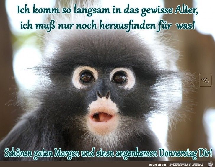 Guten Morgen Bilder Mit Affen