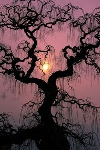 Sunset Tree, Lake Maggiore, Italy, posted by Alistar Jones via juxtapost.com