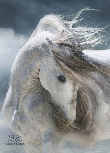 Stunning Horse...